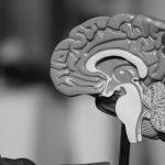 Le cerveau et la rétroaction